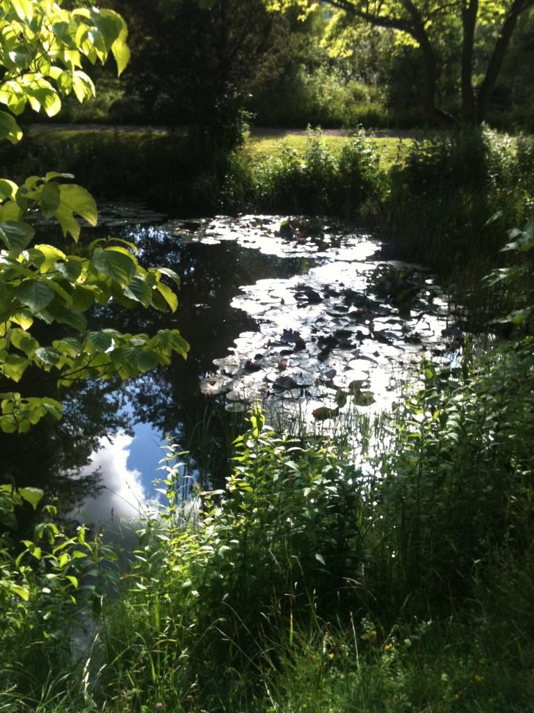 1. Vatten, ljus och ksuggor, grönska i oräkneliga nyanser.